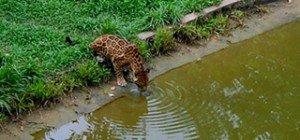 07 Zoológico do Centro de Instrução de Guerra na Selva  - Ingrid Anne