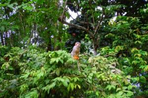 Bosque da Ciencia - 26_02 Ingrid Anne